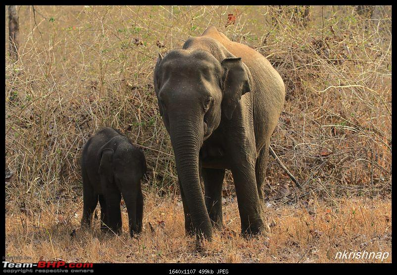 Solitary Exploration of the Nagarhole Forests-img_1100.jpg