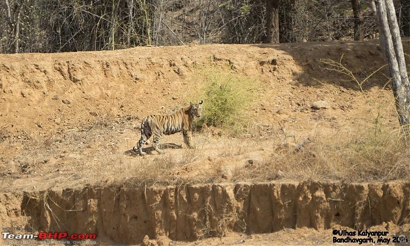 Tadoba Wilderness!-khitauli-female-cub2.jpg