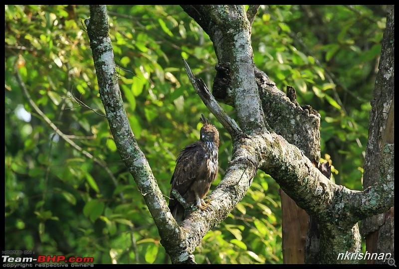 Wildlife at Nagarhole & Kabini-img_1452.jpg