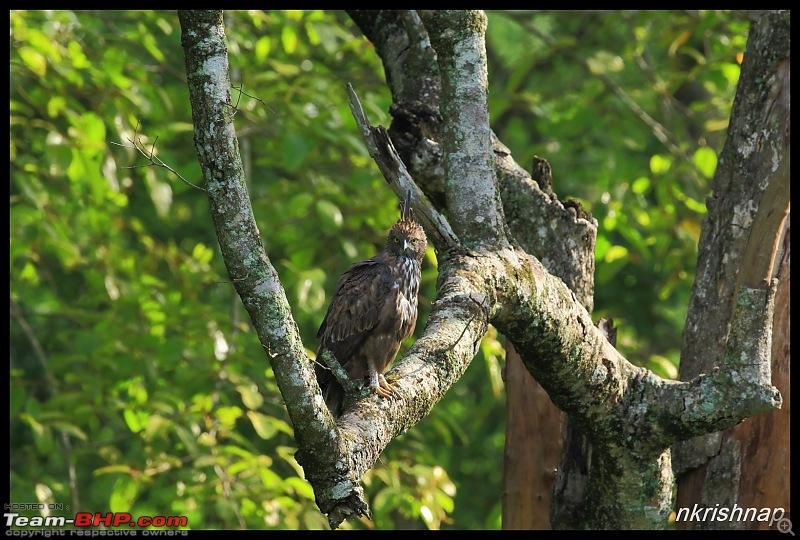 Wildlife at Nagarhole & Kabini-img_1467.jpg