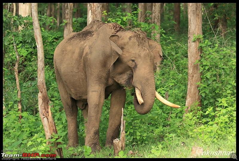 Wildlife at Nagarhole & Kabini-img_1503.jpg