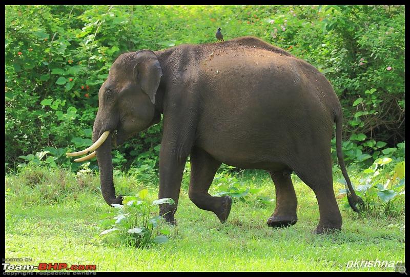 Wildlife at Nagarhole & Kabini-img_1621.jpg
