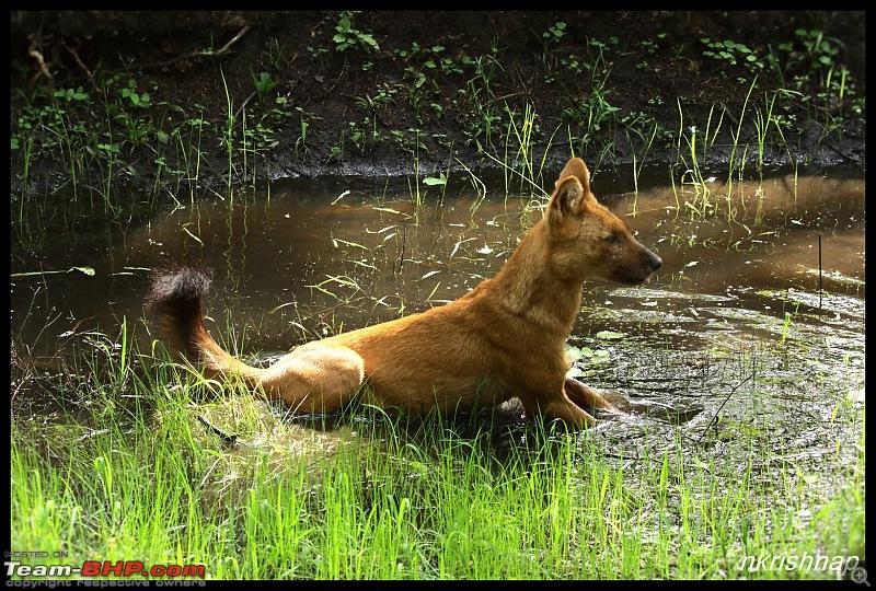 Wildlife at Nagarhole & Kabini-img_1890.jpg