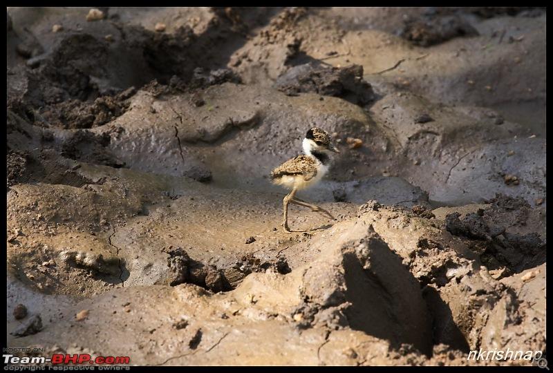 Wildlife at Nagarhole & Kabini-img_3019.jpg