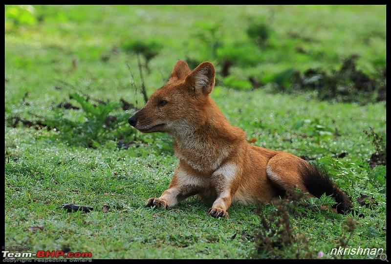 Wildlife at Nagarhole & Kabini-img_1779.jpg