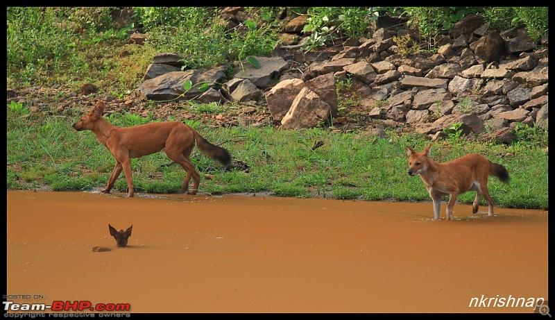 Wildlife at Nagarhole & Kabini-img_1787.jpg