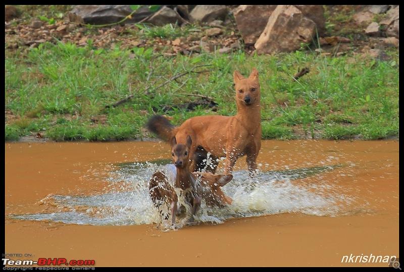 Wildlife at Nagarhole & Kabini-img_1794.jpg