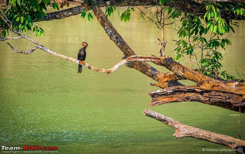 Bandipur: In search of Stripes!-dsc_2037edit.jpg