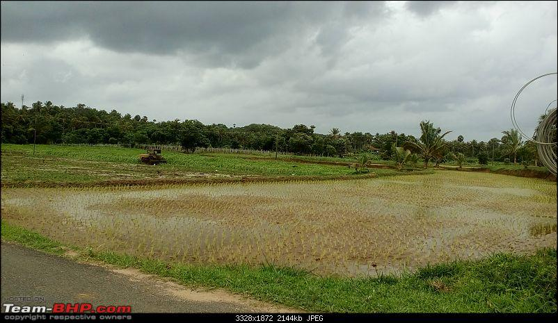 Mid-Day drive to Seethargundu-road-thru-paddy-fields-2.jpg