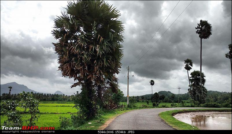 Mid-Day drive to Seethargundu-road-thru-paddy-fields-5min.jpg