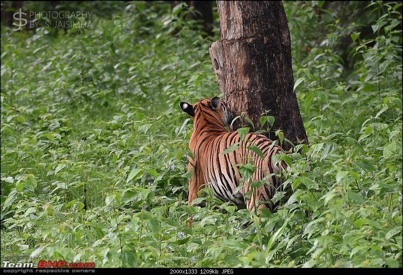 A Tigress in Kabini-kbnjun16035s.jpg