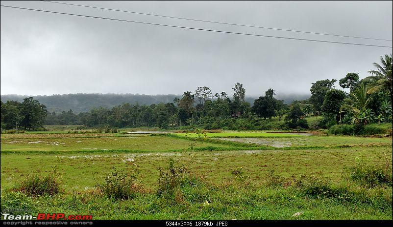 Coffee in Coorg-greenery-enroute-talakaveri-4min.jpg