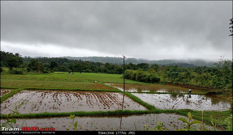 Coffee in Coorg-greenery-enroute-talakaveri-5min.jpg