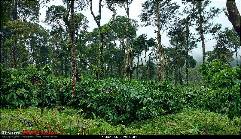 Coffee in Coorg-way-booke-stone-villas-2min.jpg