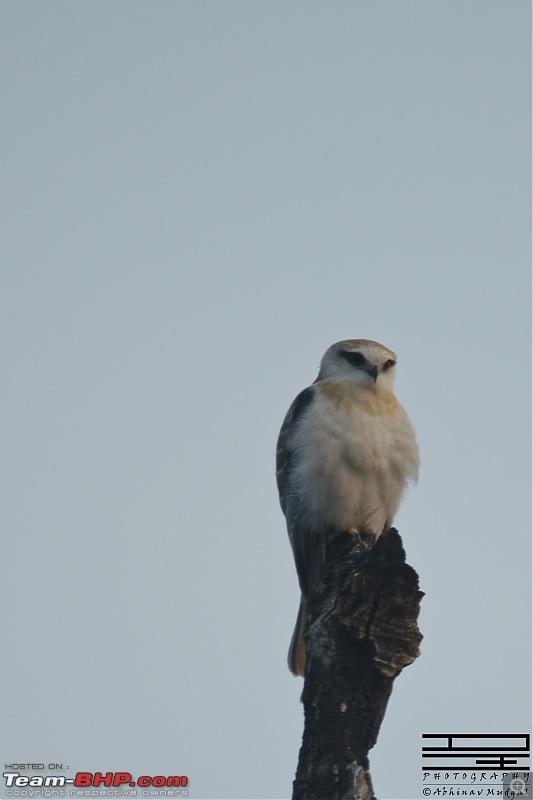 Rambling in the wild : Ranthambore, Jhalana, Bharatpur & more-dsc_0084.jpg
