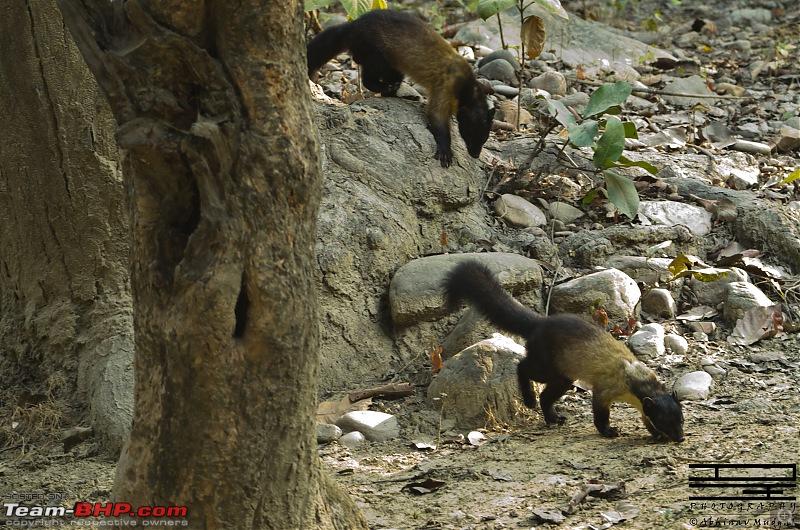 Rambling in the wild : Ranthambore, Jhalana, Bharatpur & more-dsc_0086.jpg