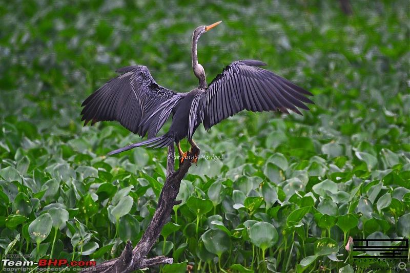 Rambling in the wild : Ranthambore, Jhalana, Bharatpur & more-dsc_0334.jpg