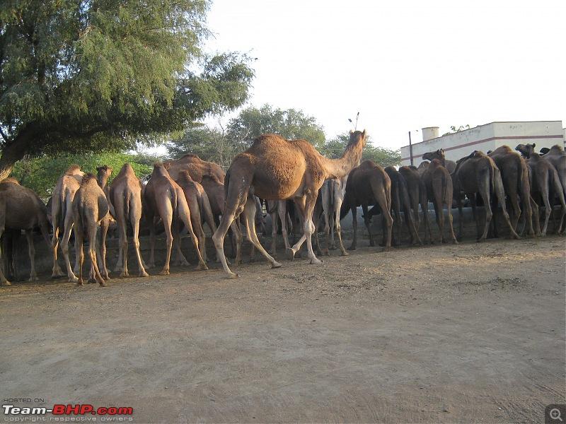 To the Golden City, Jaisalmer-img_3509.jpg