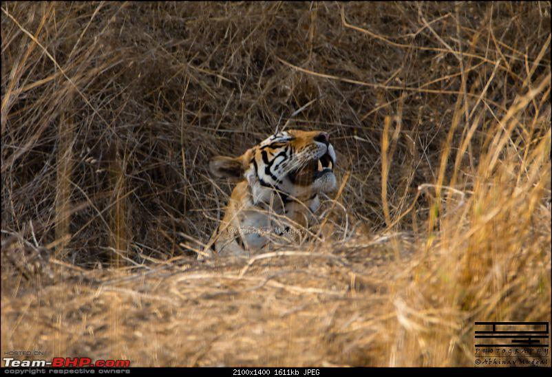 Rambling in the wild : Ranthambore, Jhalana, Bharatpur & more-avi_3051.jpg
