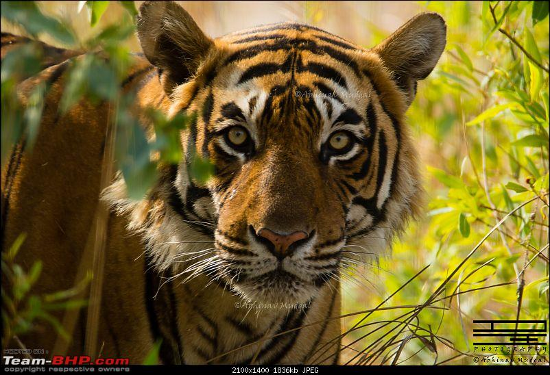 Rambling in the wild : Ranthambore, Jhalana, Bharatpur & more-avi_3225.jpg