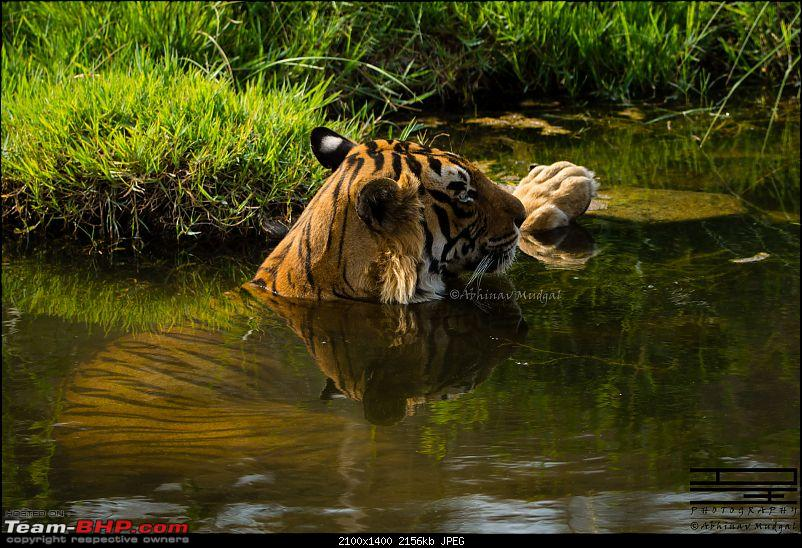 Rambling in the wild : Ranthambore, Jhalana, Bharatpur & more-avi_3359.jpg