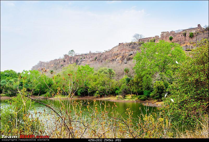 The Gods have been kind: Ranthambore National Park-fort-overlooking-lake1.jpg