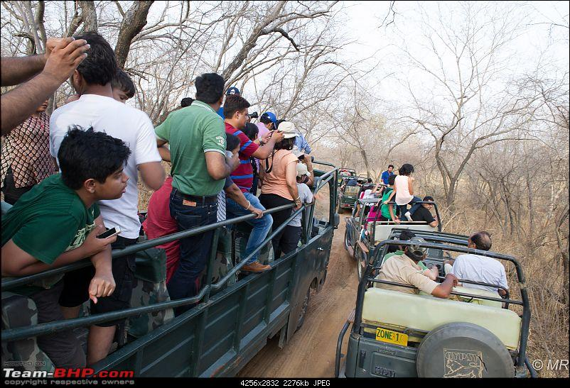 The Gods have been kind: Ranthambore National Park-mad-scramble1.jpg