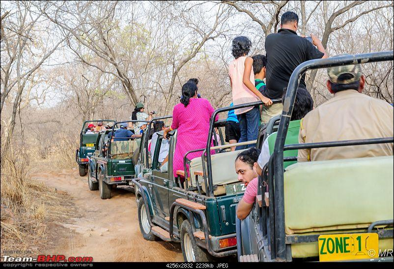 The Gods have been kind: Ranthambore National Park-mad-scramble12.jpg