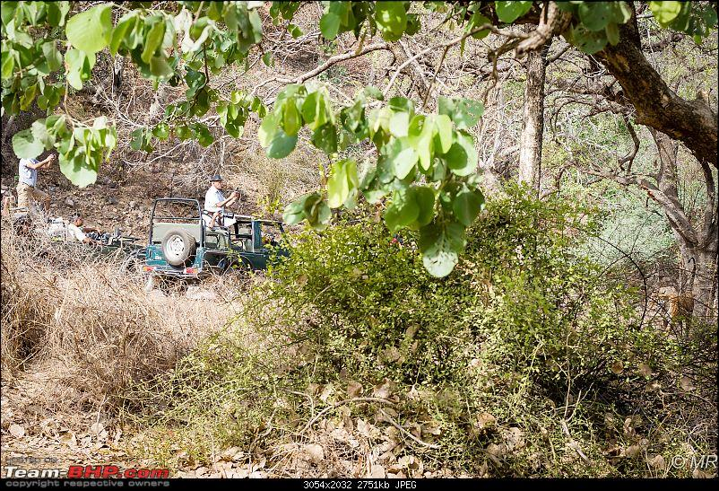 The Gods have been kind: Ranthambore National Park-tiger-moving-away12.jpg