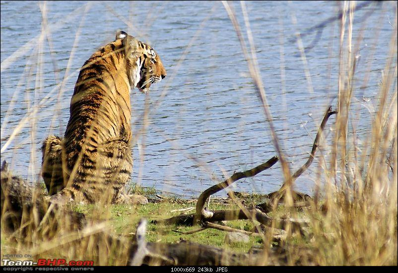 Ranthambhore : Water Hole Animal Census, tigers, forts and more....-dsc08971.jpg