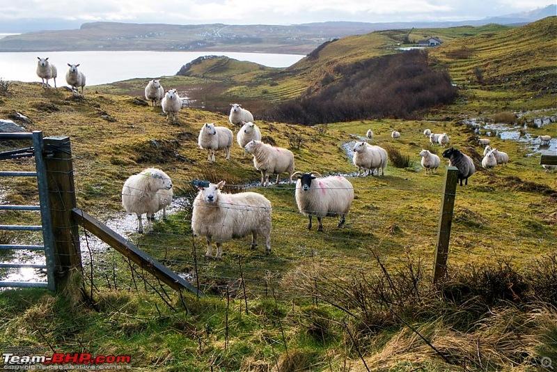 Road-trips in the United Kingdom - In & Out-dscf5891.jpg