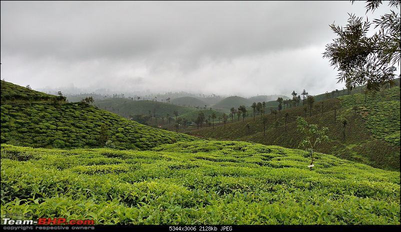 Misty tea plantations : Valparai Photologue-tea-estates-2min.jpg