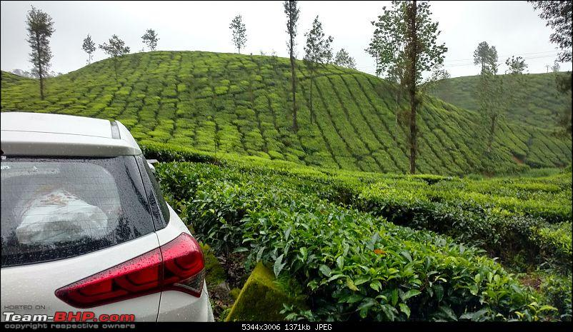 Misty tea plantations : Valparai Photologue-i20-tea-estate-3min.jpg