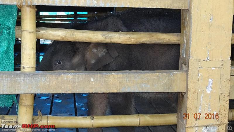 A visit to the Elephant Shelter & Rehabilitation Center in Konni, Kerala-dsc01468.jpg