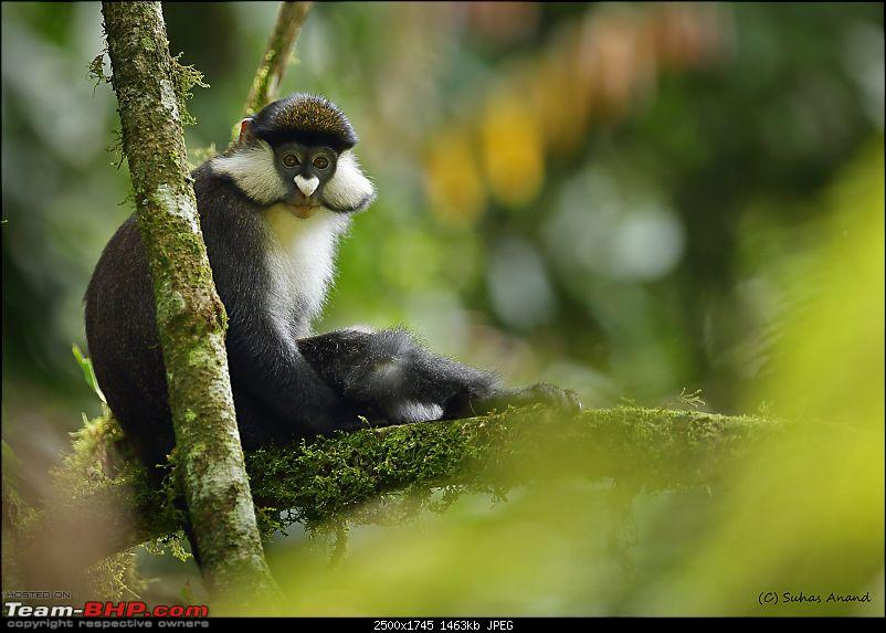 Landcruising: Uganda to Congo border-red-tailed-monkey-2.jpg