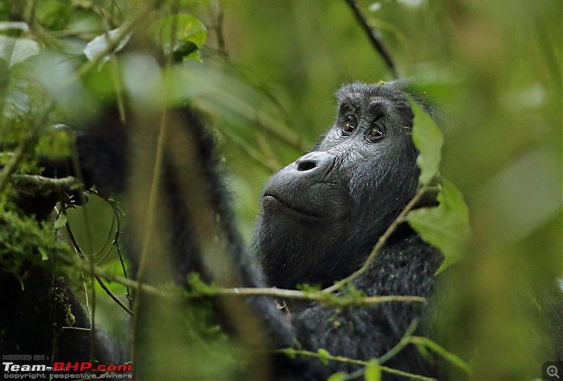 Landcruising: Uganda to Congo border-img_3994.jpg