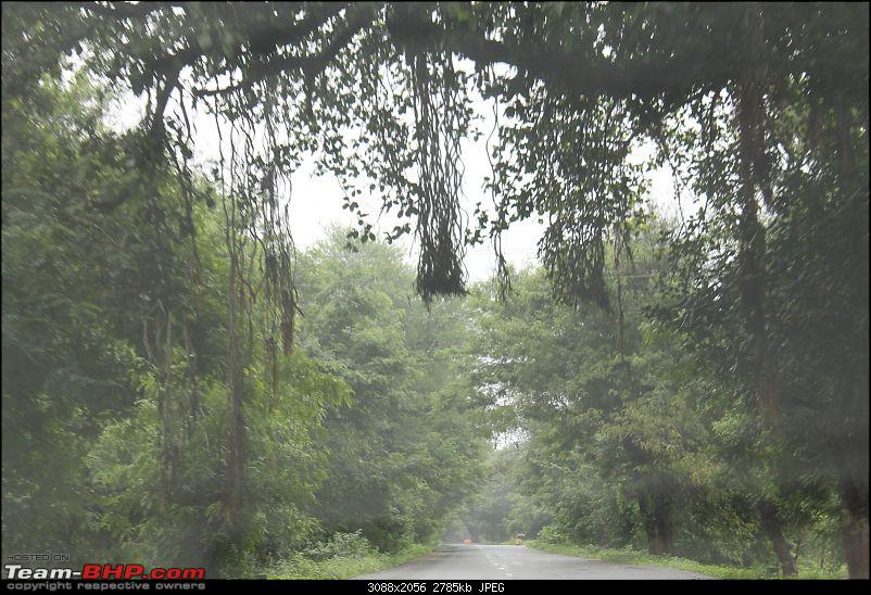 Polo forest, Gujarat: A Janmashtami in the rains-32.jpg