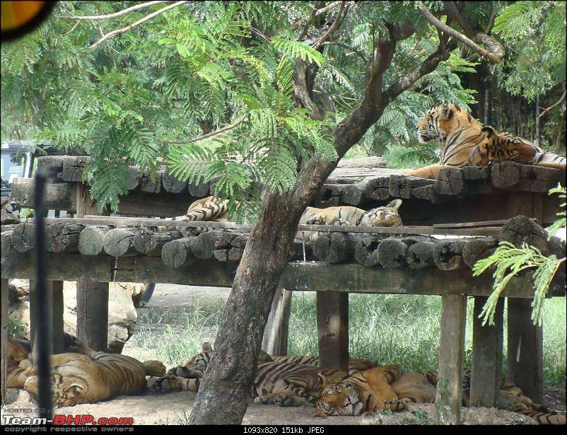 10 days across Thailand (2009) - and 8 more days (2011)-safariworld_bkk-3k150.jpg