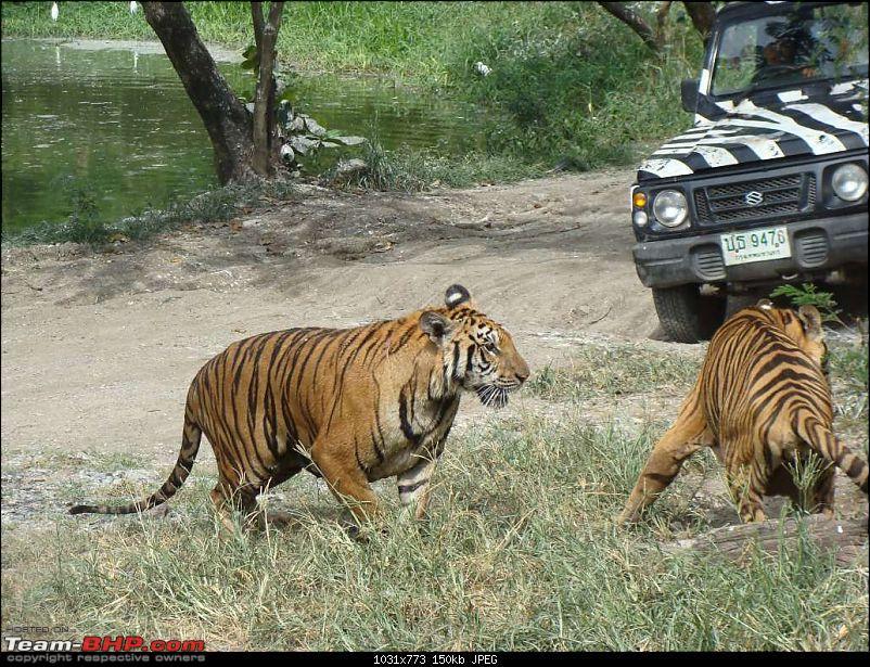 10 days across Thailand (2009) - and 8 more days (2011)-safariworld_bkk-14k150.jpg