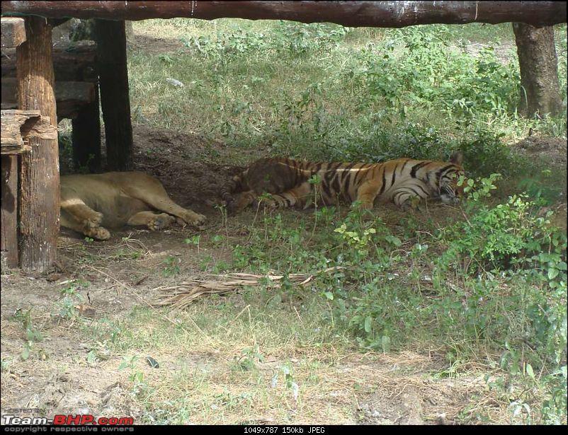 10 days across Thailand (2009) - and 8 more days (2011)-safariworld_bkk-19k150.jpg