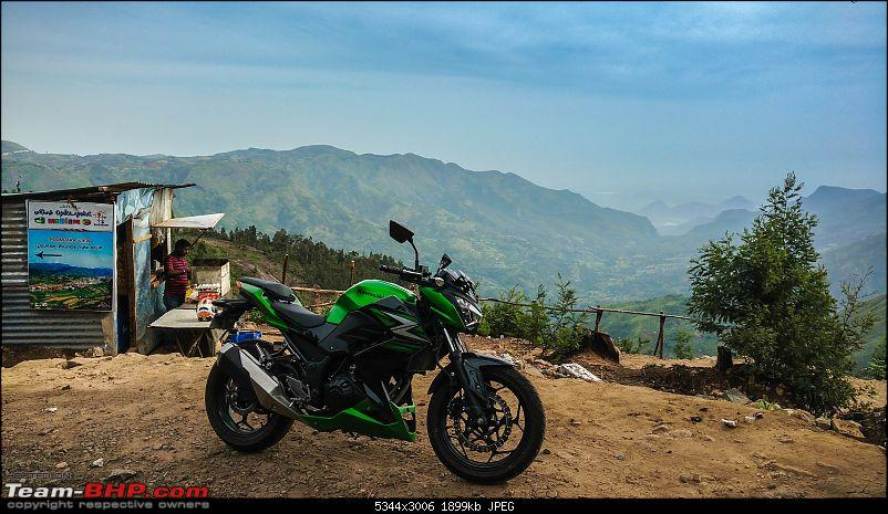 In nature's cradle - Kawasaki chronicles-tea-backdrop.jpg