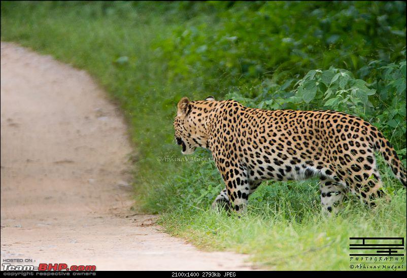 Rambling in the wild : Ranthambore, Jhalana, Bharatpur & more-avi_6581.jpg