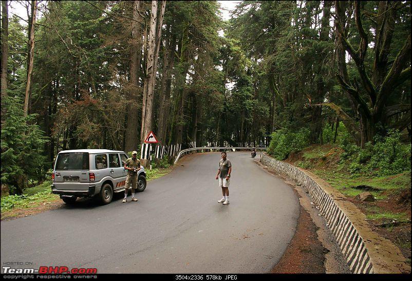 Hyd-Bandipur-Madumalai-Nagarhole-pine-forest.jpg
