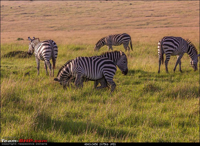 Road-tripping through the African Savanna : Maasai Mara & Zanzibar diaries-img_35282.jpg