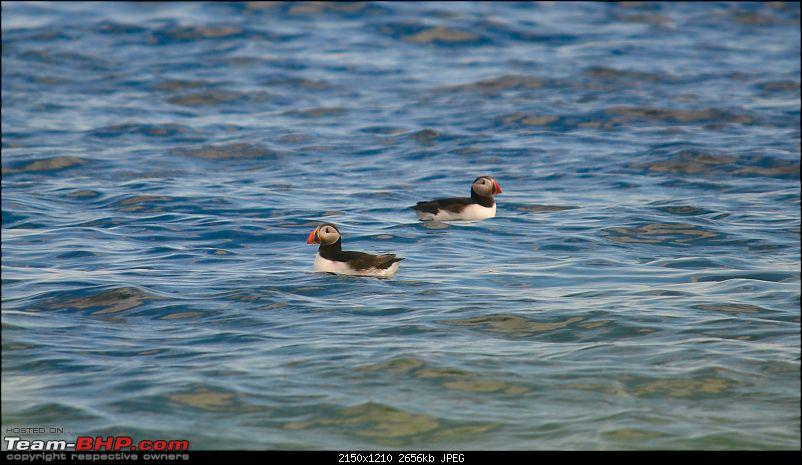 A Roadtrip in Iceland - 66°N-2.-puffins_two.jpg
