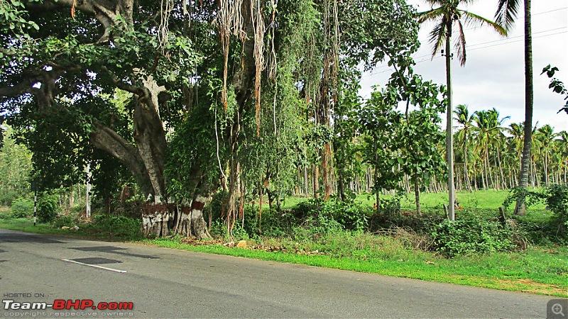 Photologue: Bangalore -> Kollur -> Murudeshwara drive-image00062.jpg