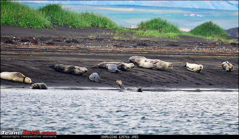 A Roadtrip in Iceland - 66°N-15.-seals.jpg