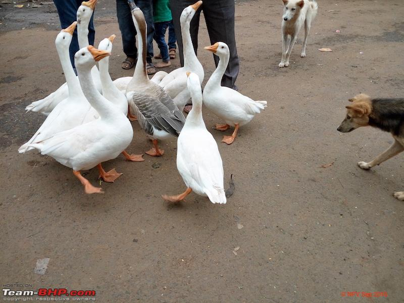 Name:  24 geese 2.jpg