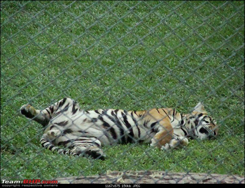 10 days across Thailand (2009) - and 8 more days (2011)-tigercnx-19k150.jpg