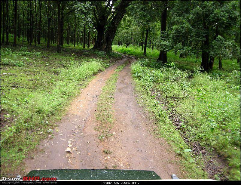 Hyd-Bandipur-Madumalai-Nagarhole-into-forest.jpg